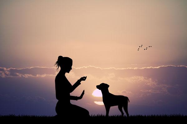 Hundetraining - Promo